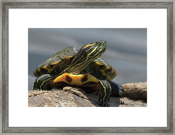 Portrait Of A Turtle Framed Print
