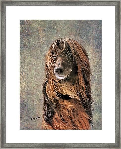 Portrait Of An Afghan Hound Framed Print