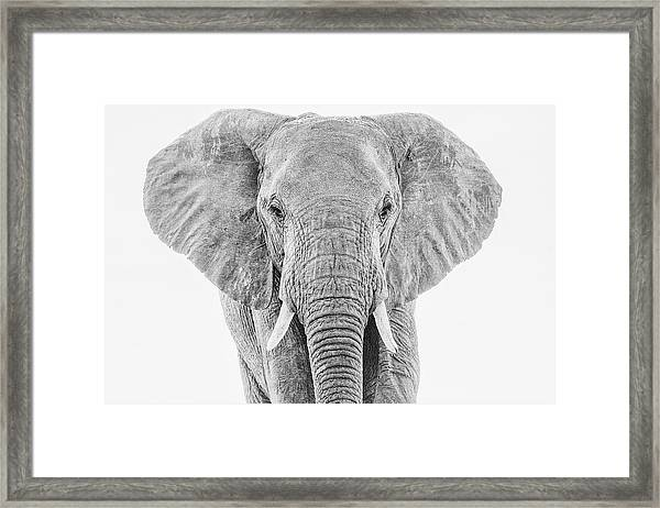 Portrait Of An African Elephant Bull In Monochrome Framed Print