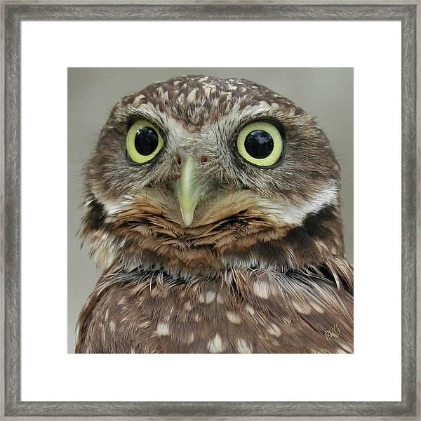 Portrait Of Burrowing Owl Framed Print