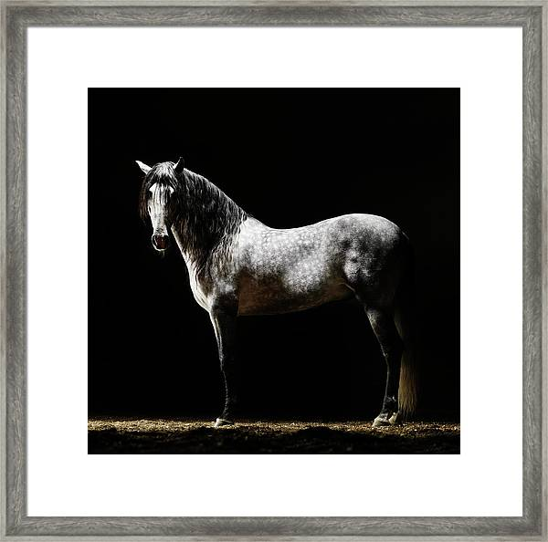 Portrait Of Standing Grey Horse Framed Print