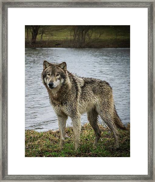 Posing By The Water Framed Print