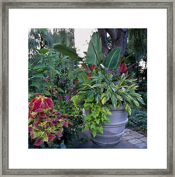 Potted Plants Including Bird Of Framed Print