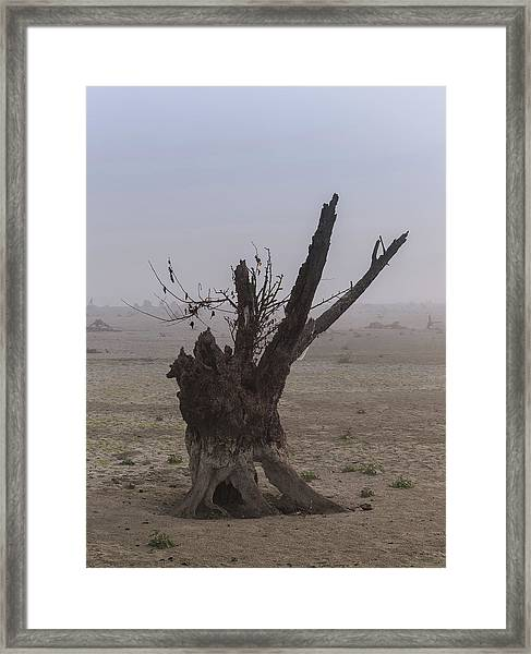 Prayer Of The Ent Framed Print
