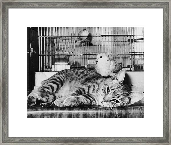 Precarious Perch Framed Print