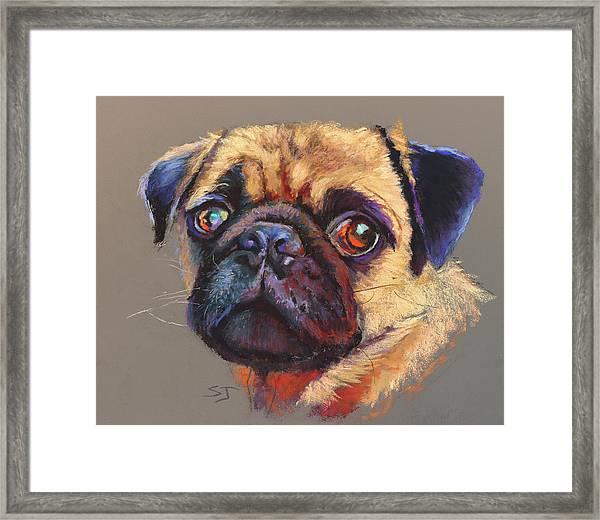Precious Pug Framed Print