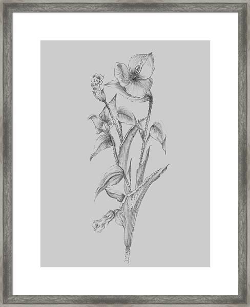 Pretty Flower I Framed Print