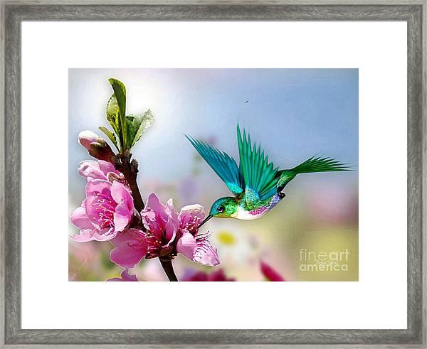 Pretty Hummingbird Framed Print