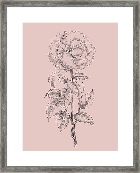 Pretty Pink Flower  Framed Print