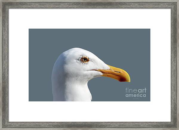 Pretty Western Gull In Profile Framed Print