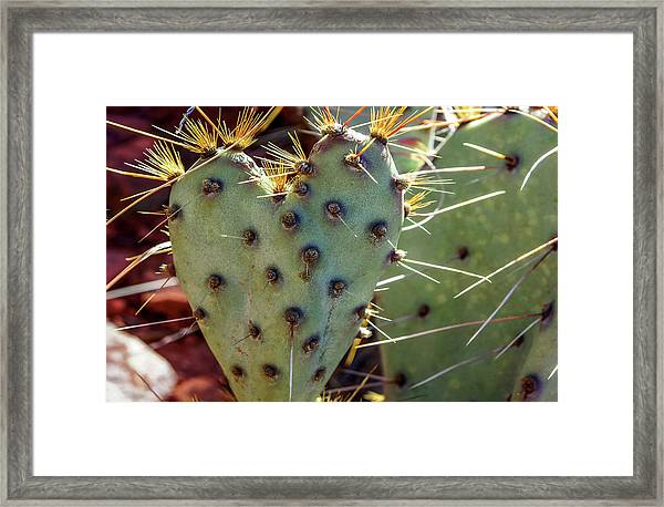 Framed Print featuring the photograph Prickly Pear Heart 1 by Dawn Richards