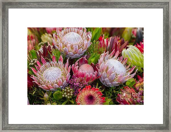 Protea Framed Print