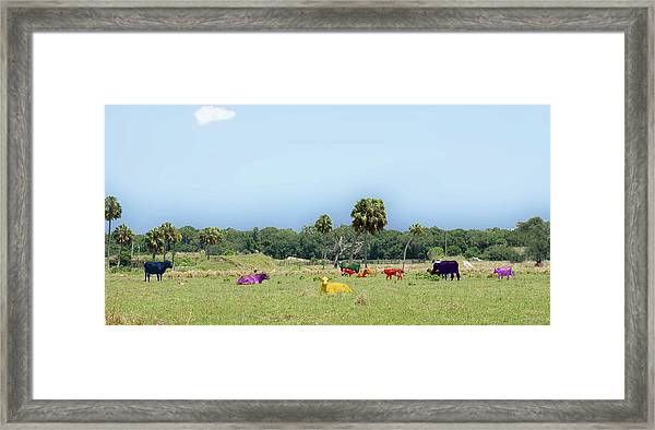 Psychedelic Cows Framed Print