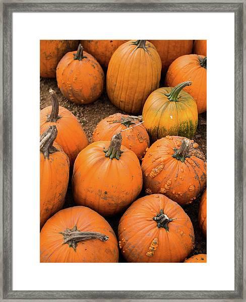 Pumpkins Of Different Shapes Framed Print