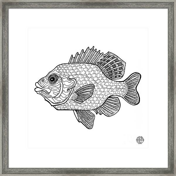 Framed Print featuring the drawing Pumpkinseed Fish by Amy E Fraser