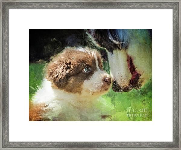Puppy Dog Framed Print