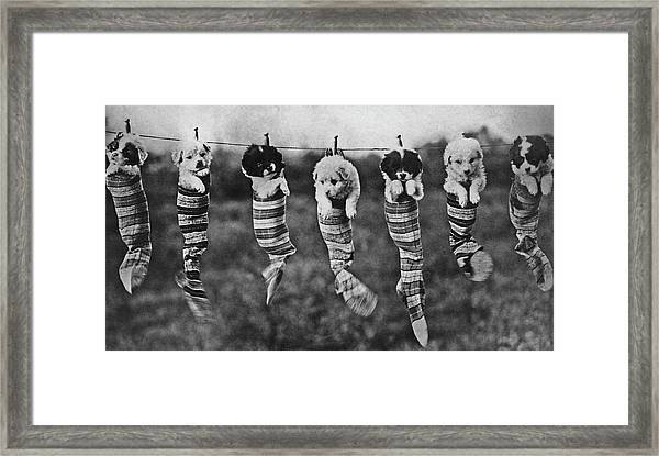 Puppy Wash Day Framed Print by Archive Photos