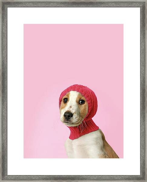 Puppy With Hat Framed Print