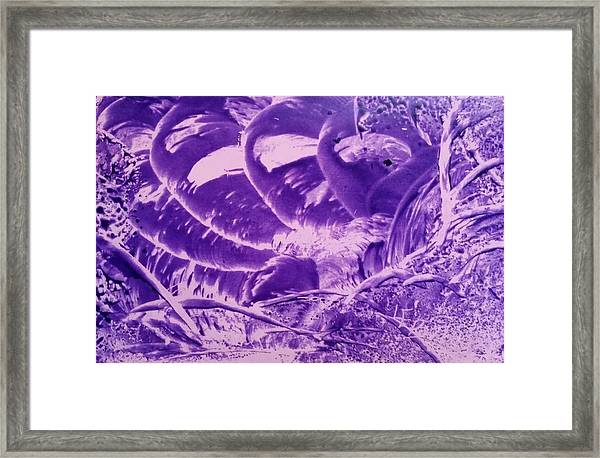 Purple Abstract, Octopus Framed Print