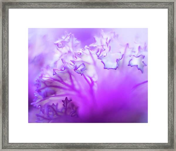 Purple Mystery Framed Print
