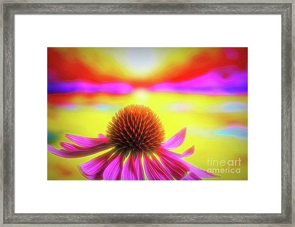 Purple Coneflower 2 Framed Print
