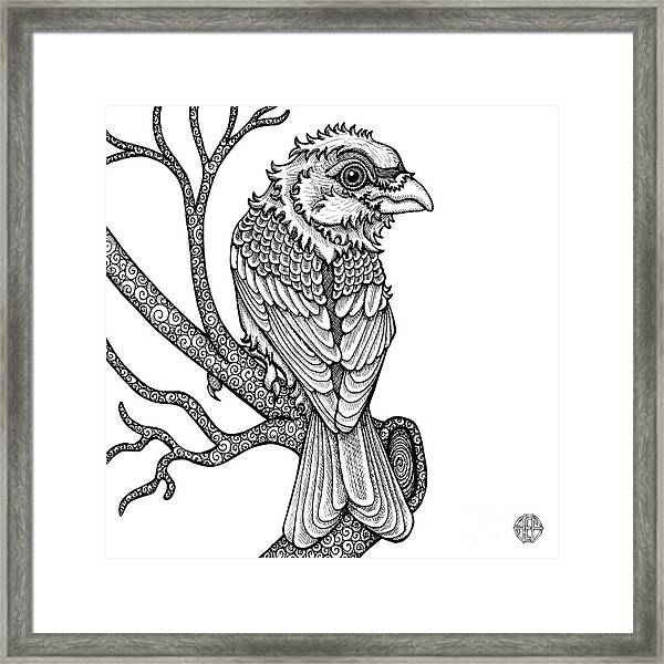 Framed Print featuring the drawing Purple Finch by Amy E Fraser