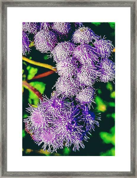 Purple Fur Framed Print