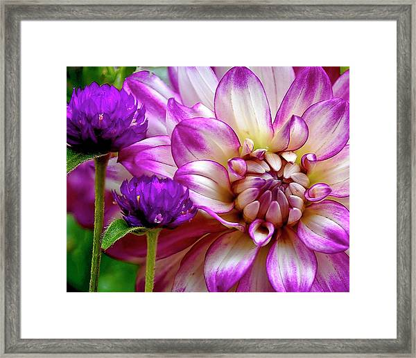 Purple Pals Framed Print