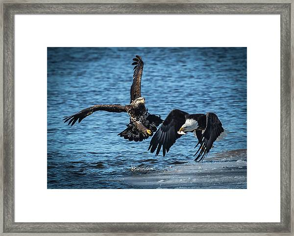 Push Off Framed Print