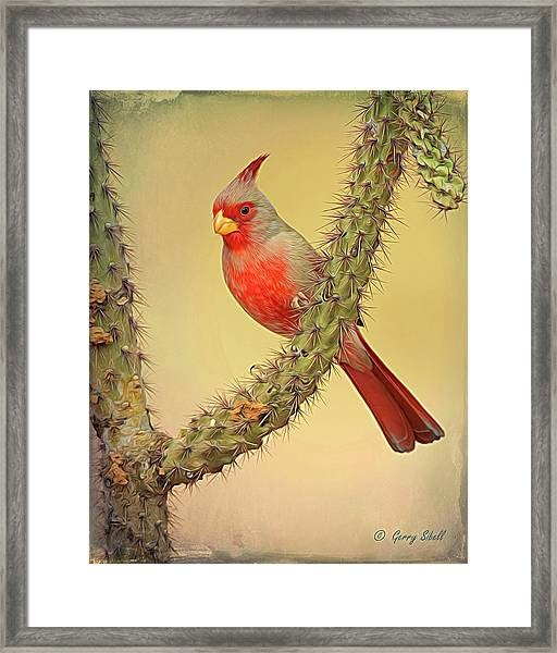 Pyrrhuloxia-filter Framed Print