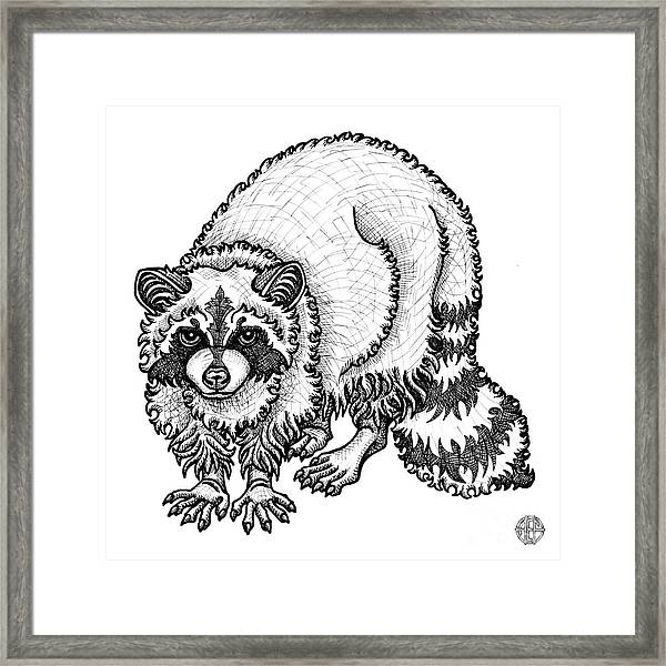 Framed Print featuring the drawing Raccoon by Amy E Fraser