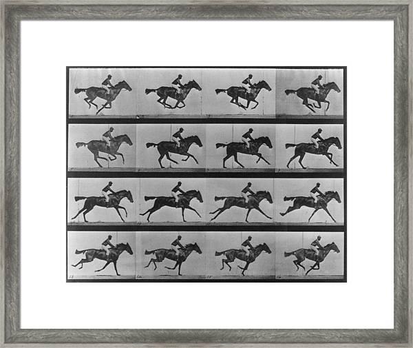 Racing Study Framed Print