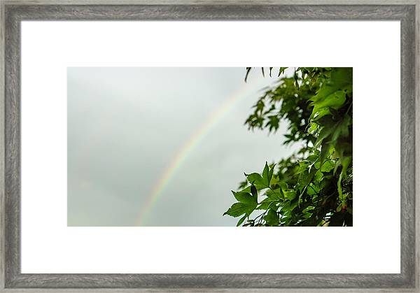 Rainbow With Leaves In Foreground Framed Print