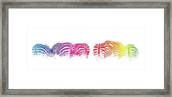 Rainbow Zebras Framed Print