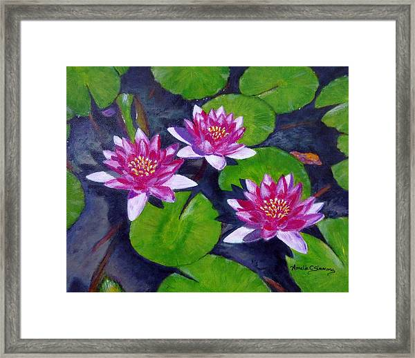 Rancho Water Lilies Framed Print