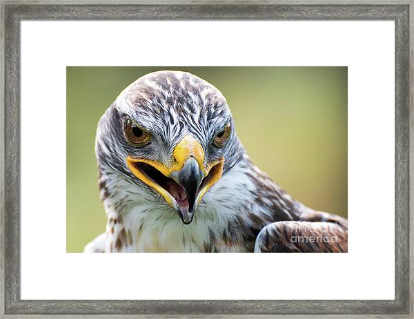 Raptor Power Framed Print
