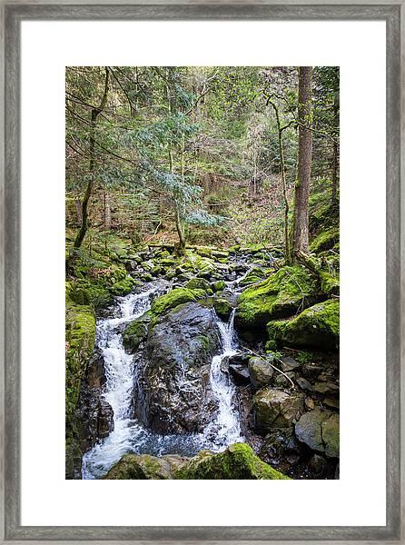 Ravenna Gorge Black Forest Framed Print