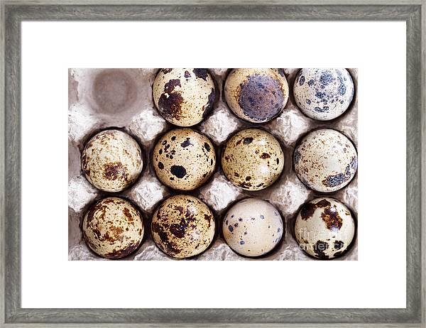 Raw Quail Eggs In Egg Holder From Above Framed Print