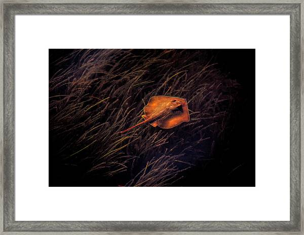 Ray In The Grass Flats Framed Print