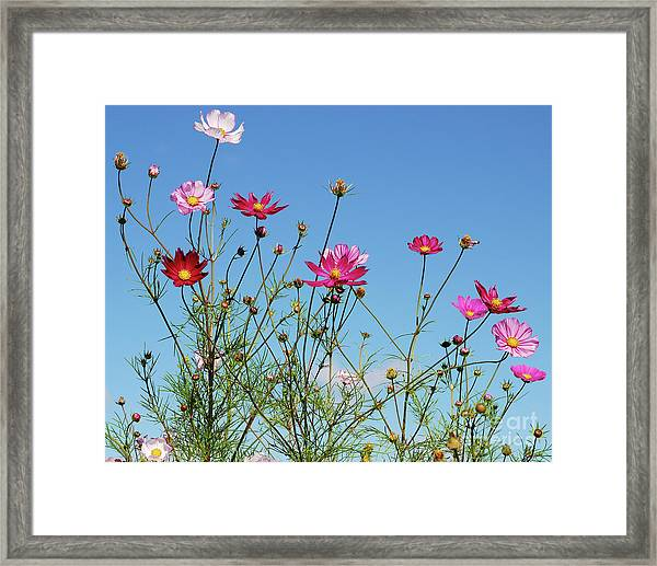 Reach For The Cosmos Framed Print