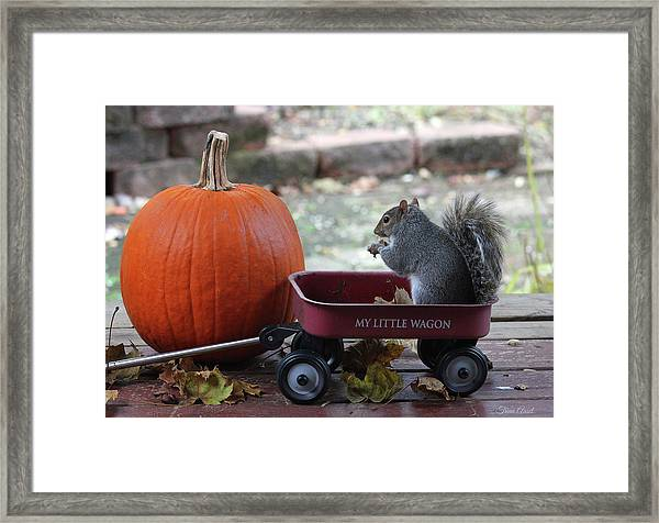 Ready To Ride My Little Red Wagon Framed Print