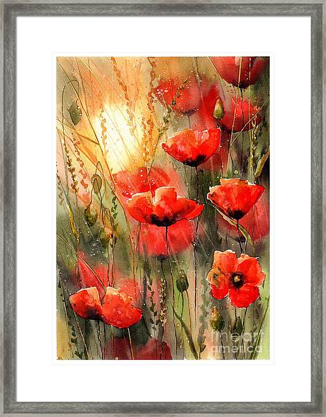 Real Red Poppies Framed Print