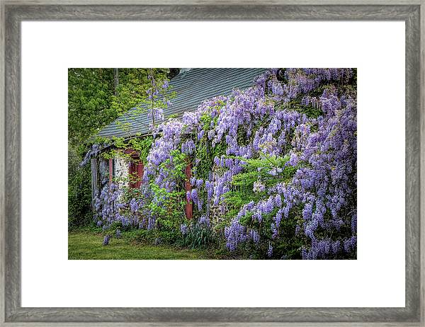 Reclaimed By Nature Framed Print