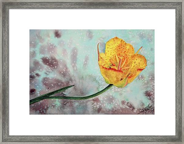 Reclining Mariposa Lily Framed Print by Robin Street-Morris