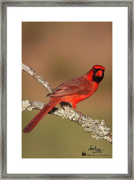 Red And Radiant Framed Print