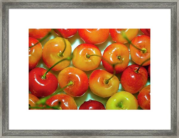 Red And Yellow Cherries On A Plate Framed Print by By Ken Ilio