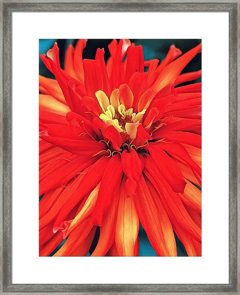 Red Bliss Framed Print