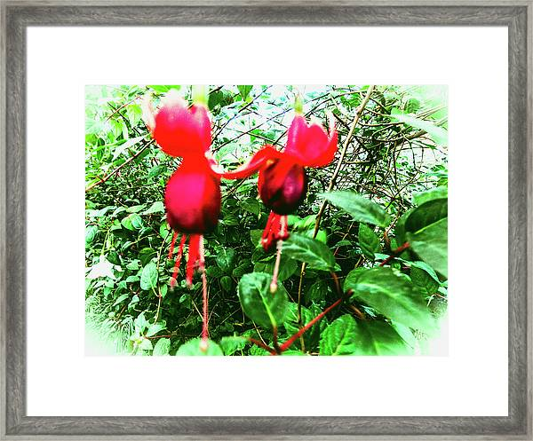 Red Candies Framed Print
