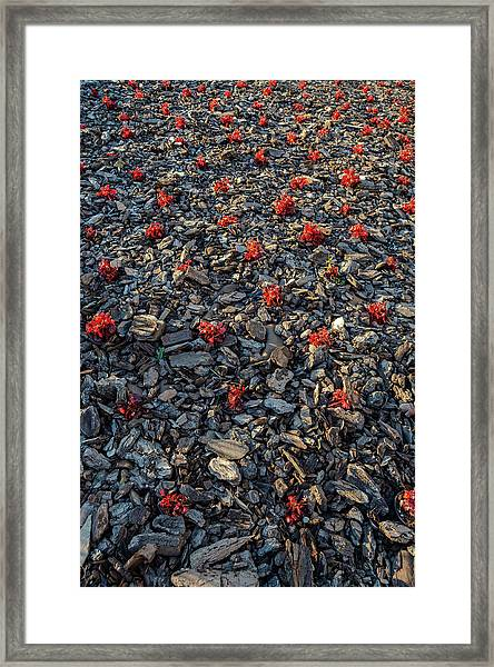 Red Flowers Over Stones Framed Print