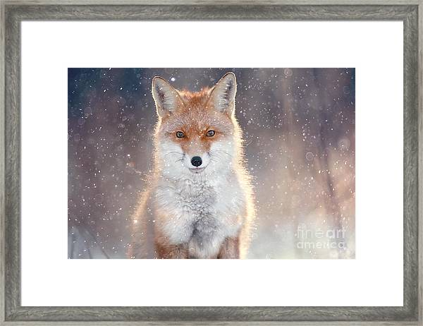 Red Fox In Winter Forest Pretty Framed Print